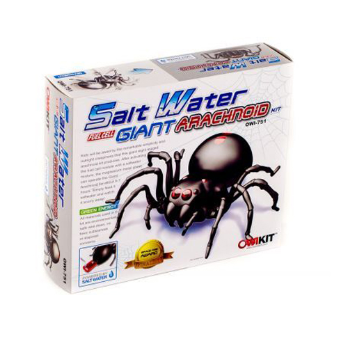 Salt Water Spider